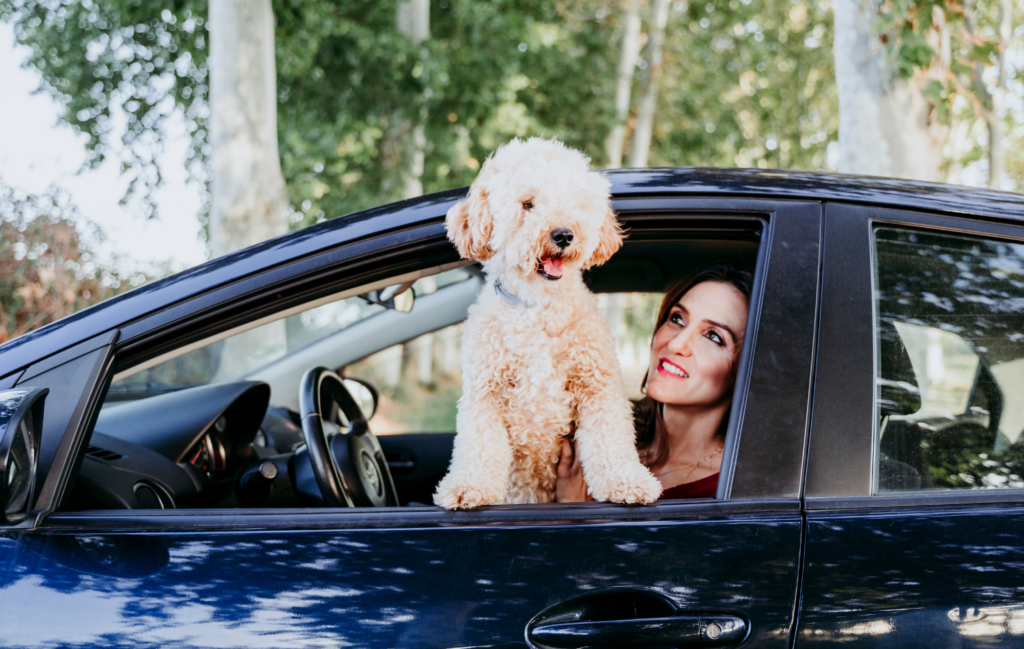 How to Keep Your Pets Safe in Your Automobile